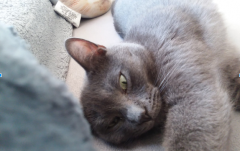 The Steady Purring of a Gray Cat
