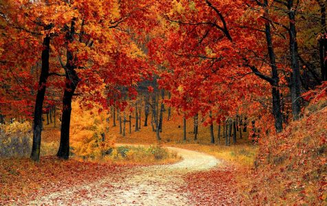 Top 5 Things To Do in Fall