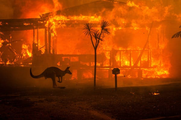 Australian Bushfires: What Is Happening and What Has Been Done