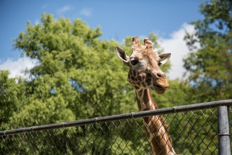 How Museums and Zoos are Handling Covid-19