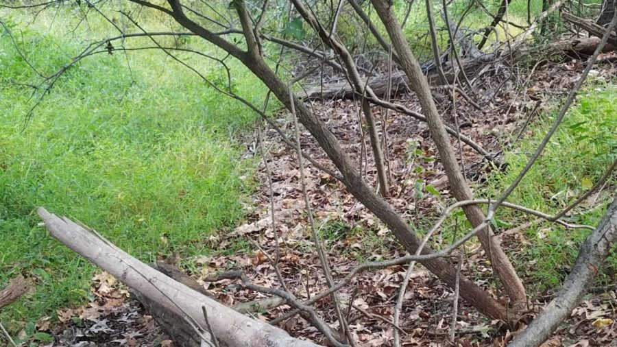 An alert Eastern Chipmunk sitting on a log, bottom left