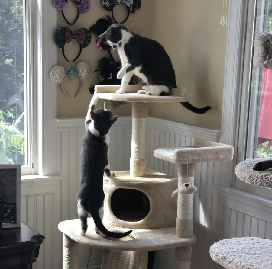 Cats of Boro
